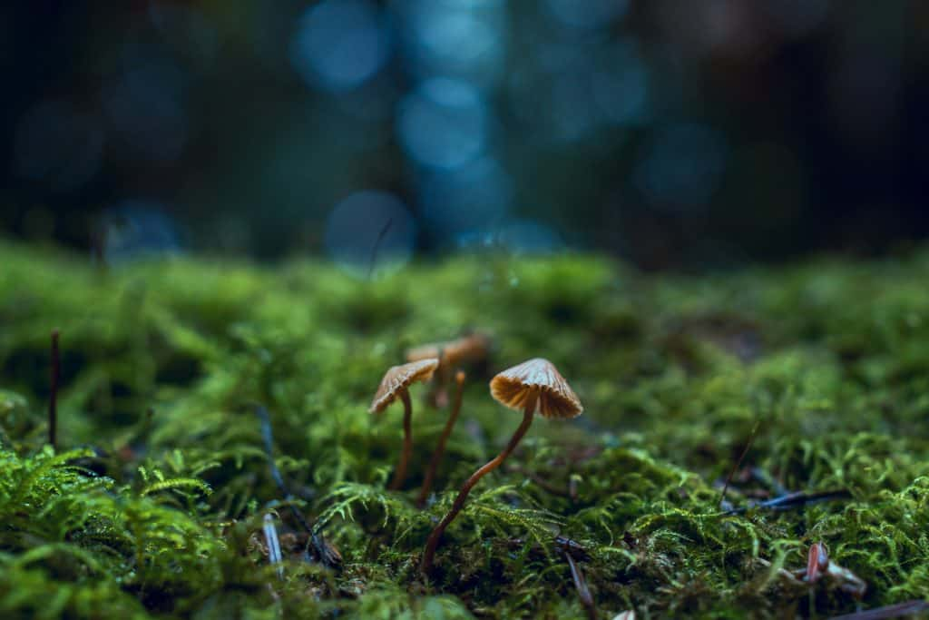 """Sylvia Plath's poem """"Mushrooms"""" seems to me to be as much about a state of mind as about ceps."""